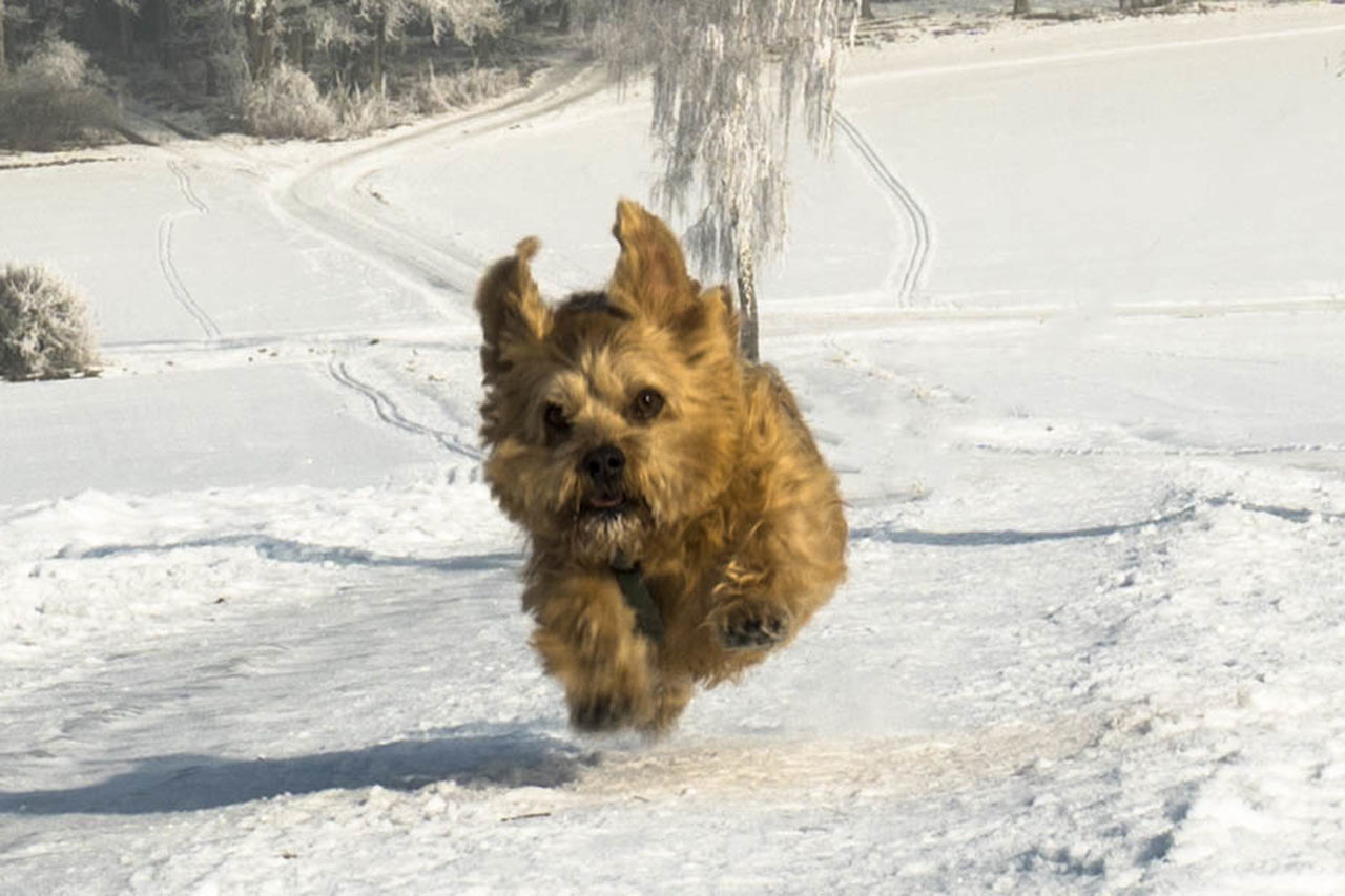 Animal Themes Cold Temperature Dog Domestic Animals Looking At Camera No People One Animal Pets Running Dog Snow Winter