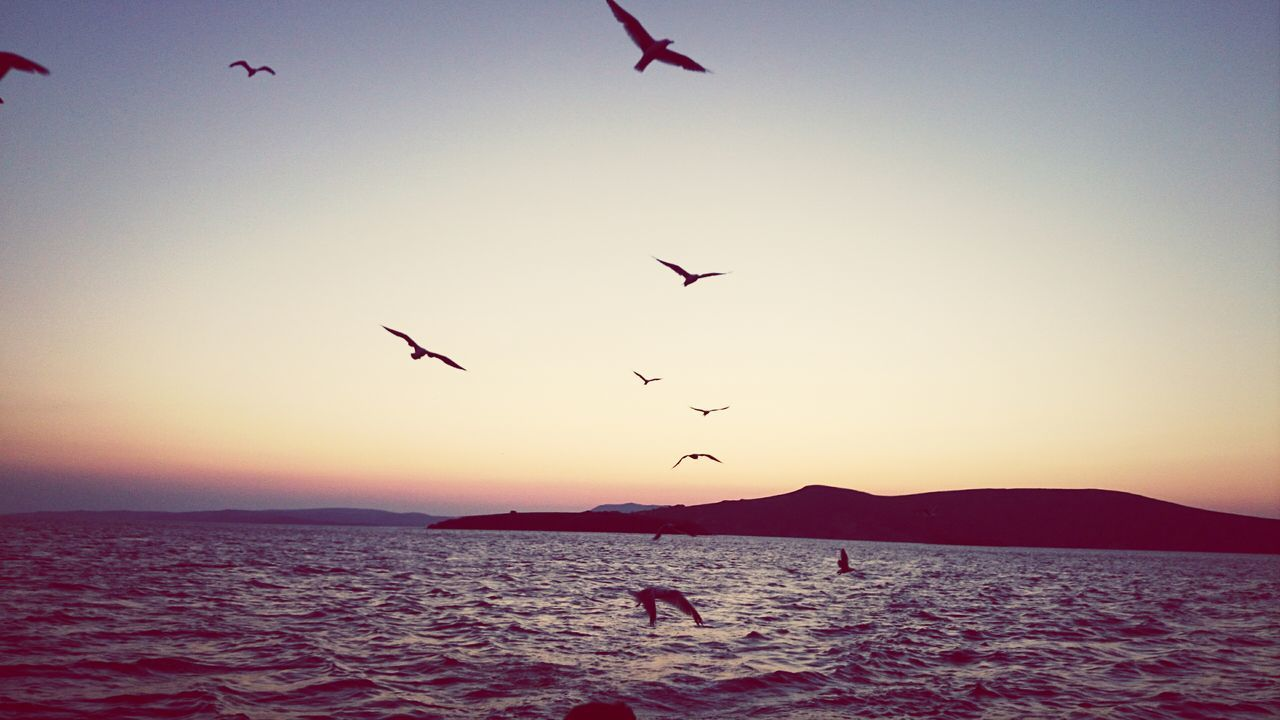 sunset, flying, bird, silhouette, animals in the wild, nature, beauty in nature, animal themes, sea, flock of birds, sky, mid-air, scenics, large group of animals, outdoors, tranquil scene, tranquility, water, clear sky, animal wildlife, spread wings, no people, day