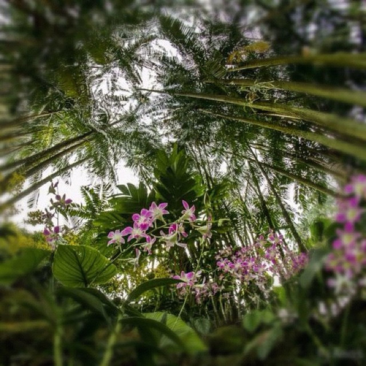 growth, nature, flower, plant, tree, no people, beauty in nature, outdoors, day, fragility, freshness, close-up