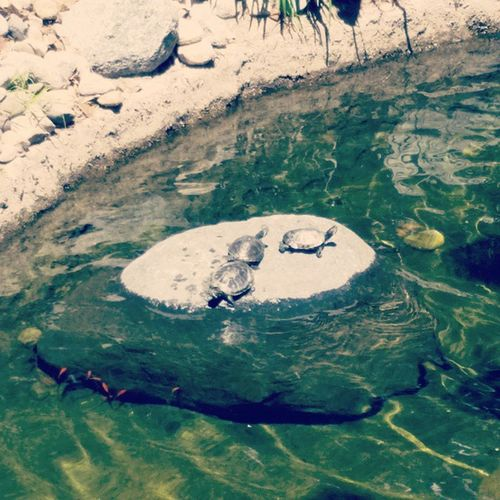 Baby turtles! Turtles Vaca Lovemylive Sandiego