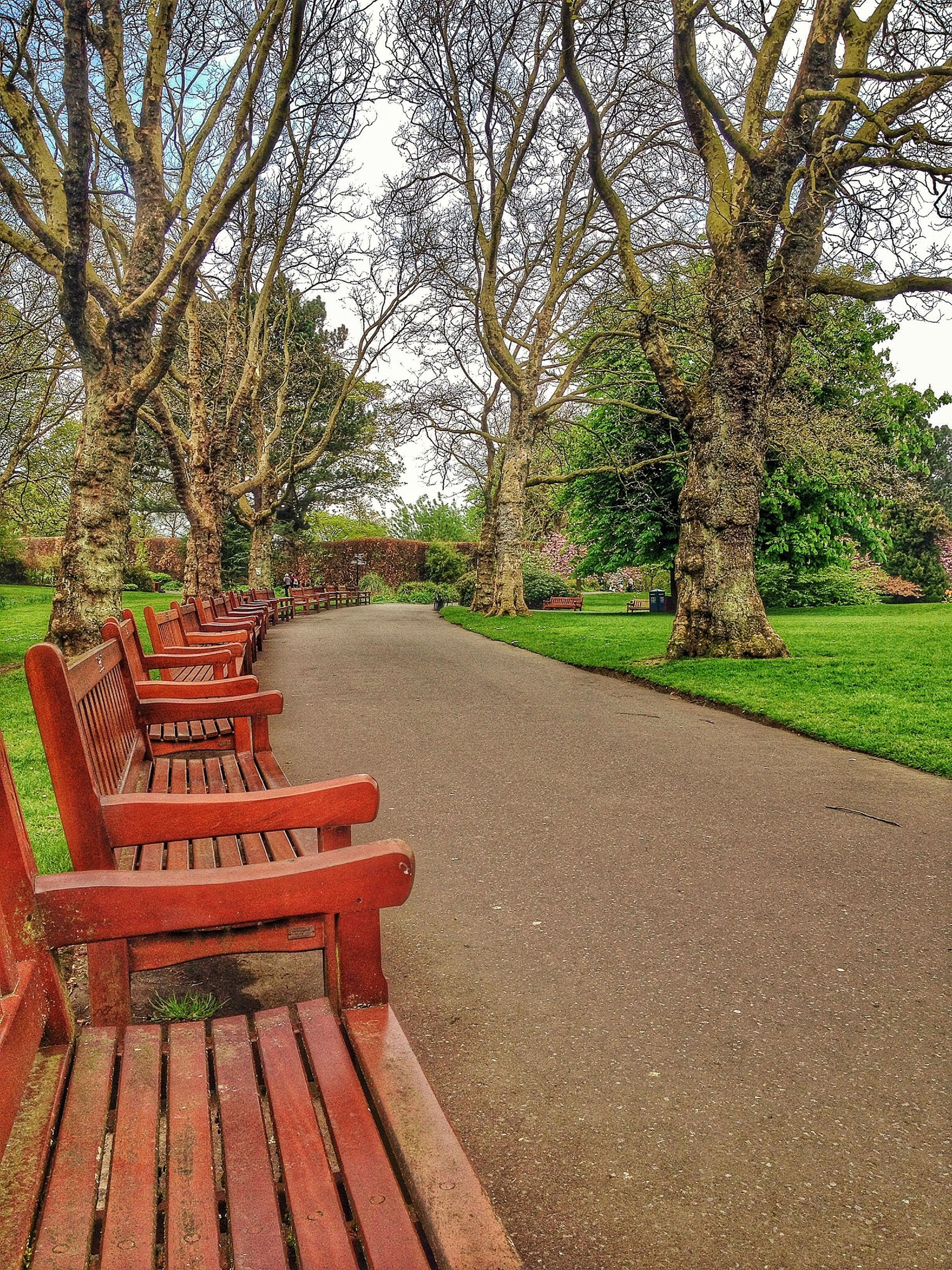 tree, park - man made space, tranquility, the way forward, footpath, tranquil scene, growth, nature, shadow, bench, sunlight, park, steps, empty, green color, grass, walkway, scenics, beauty in nature, day