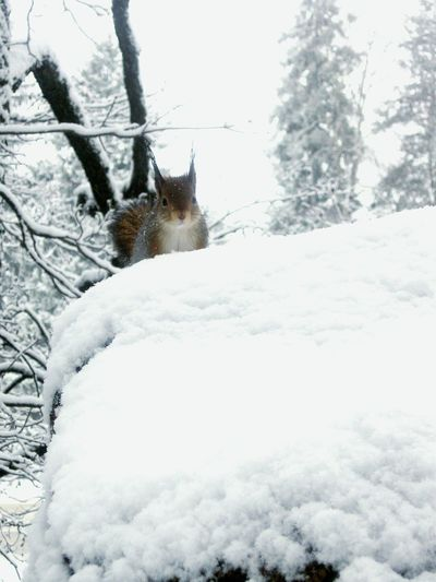 winter park snow squirrEl Hello World Relaxing