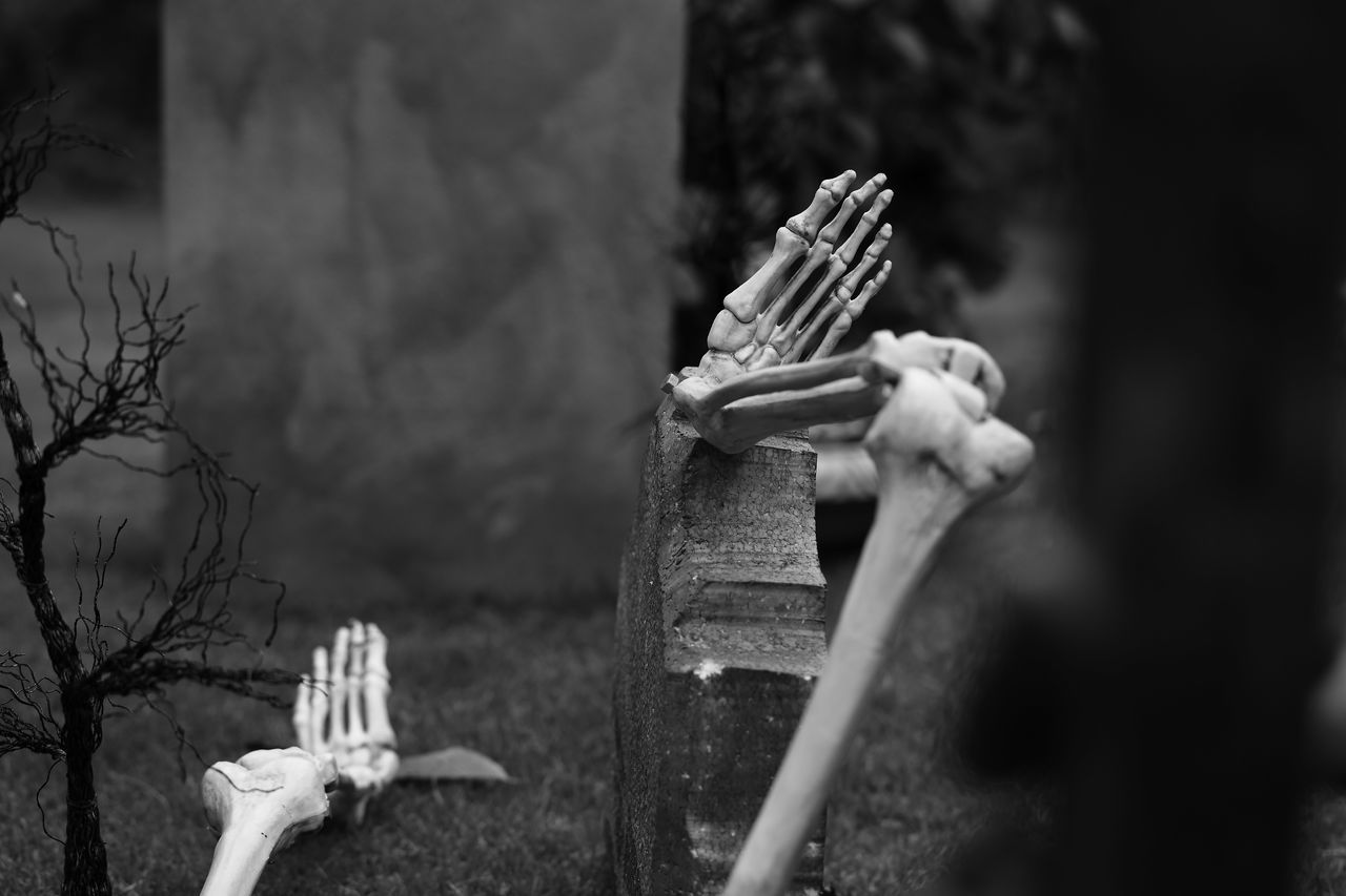 Beautiful stock photos of halloween, Celebration, Day, Front Or Back Yard, Halloween