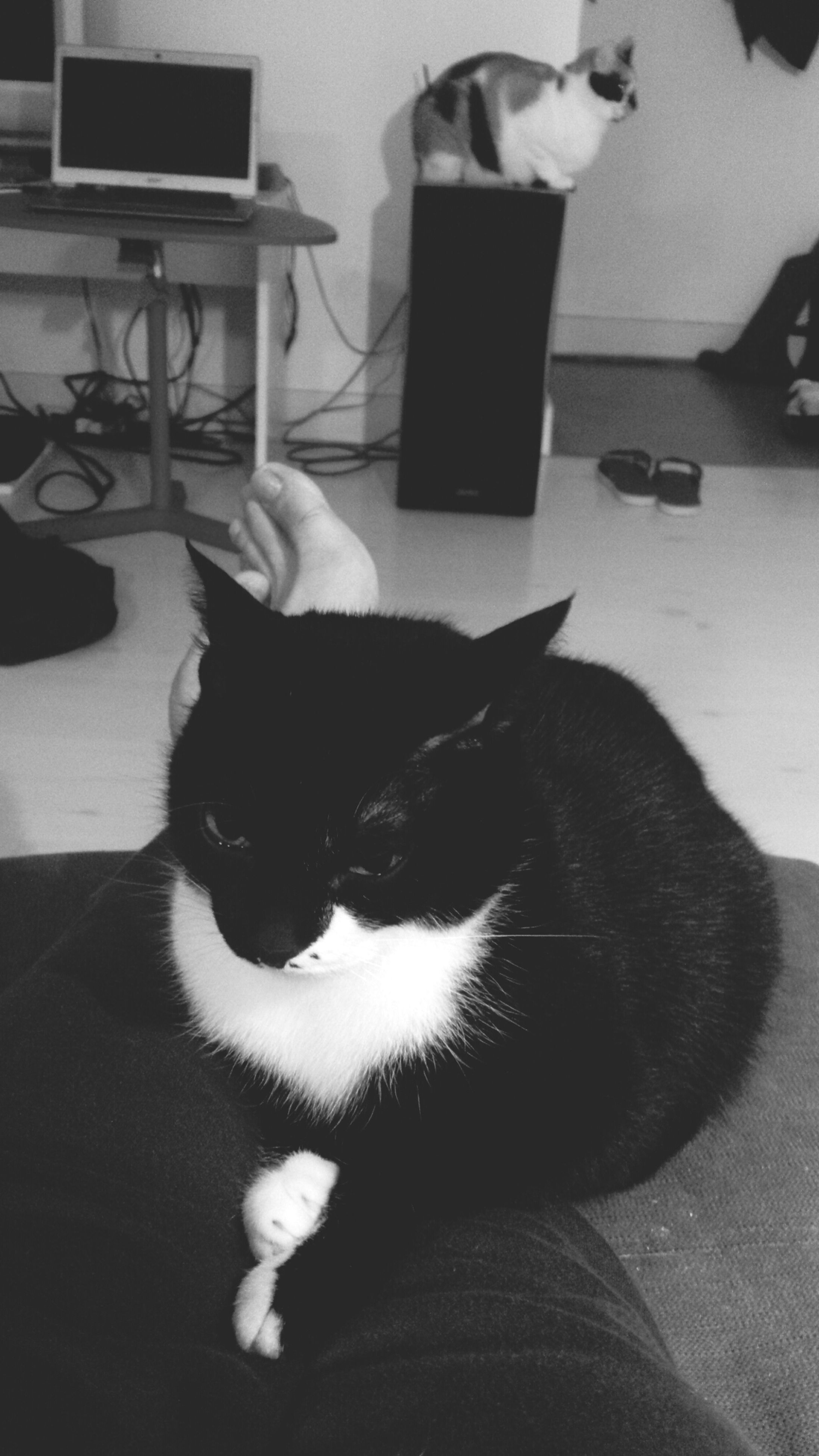 pets, indoors, domestic animals, domestic cat, cat, one animal, mammal, animal themes, feline, home interior, relaxation, whisker, bed, sofa, home, sitting, lying down, resting, black color, portrait
