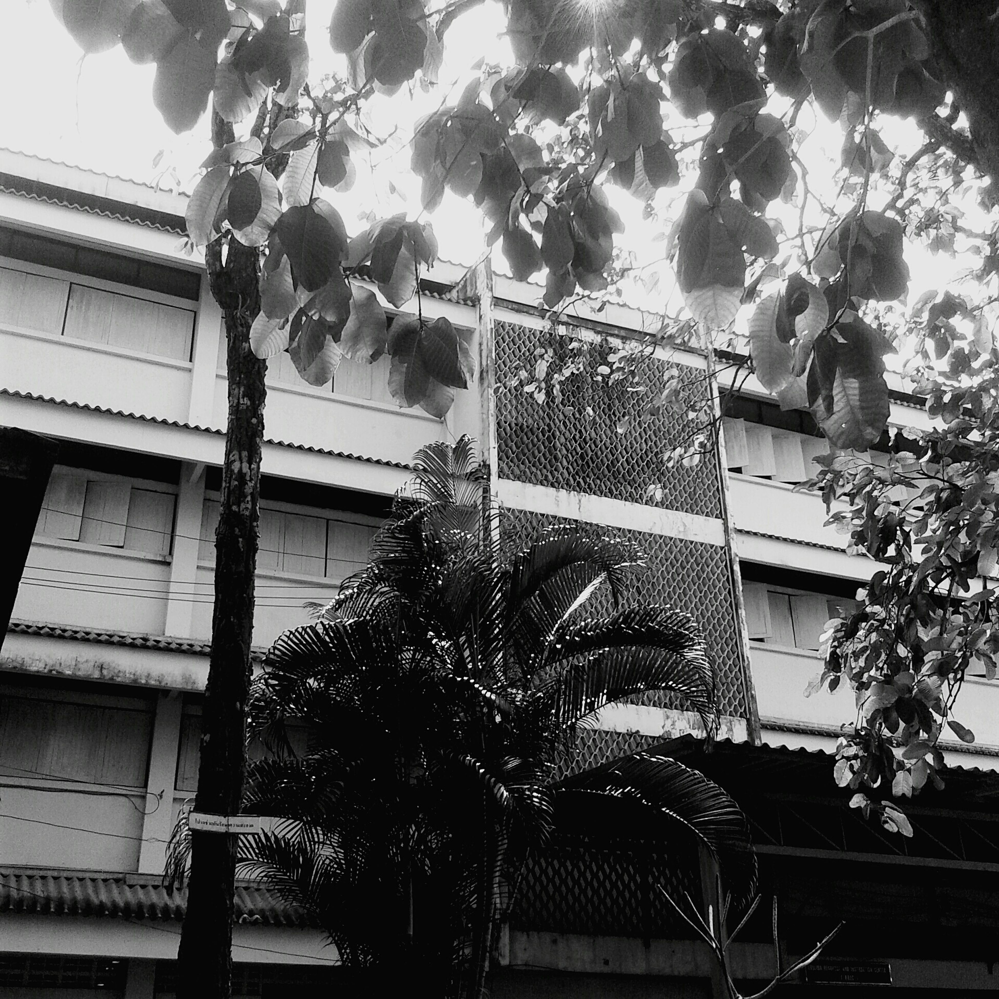 architecture, built structure, low angle view, building exterior, tree, window, branch, residential building, building, growth, house, residential structure, sky, day, balcony, glass - material, no people, outdoors, street light, city