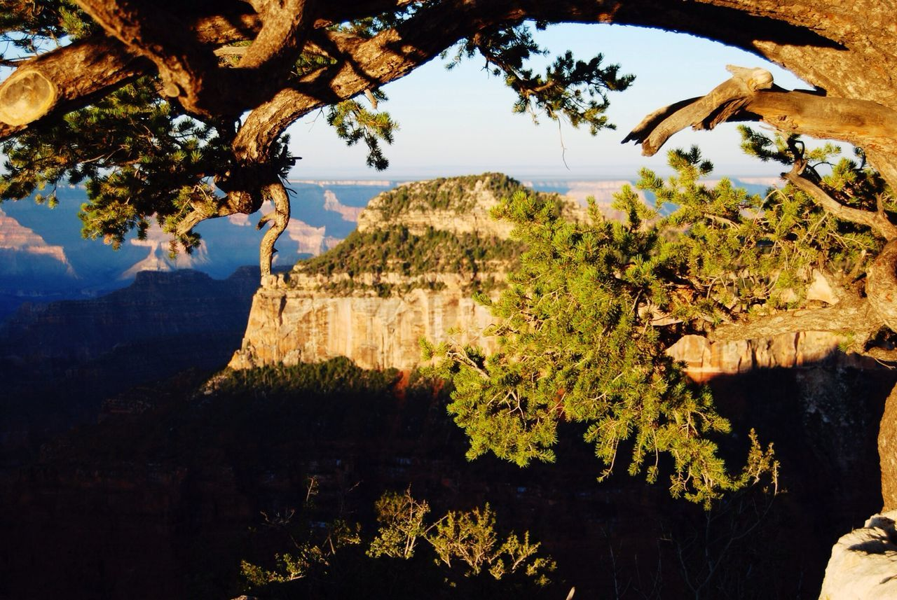 Beautiful stock photos of grand canyon, Beauty In Nature, Branch, Calm, Clear Sky
