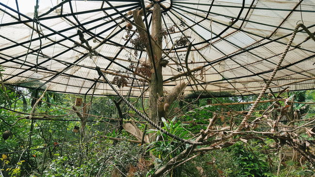 Architecture Birdcage Botanical Garden Botany Built Structure Day Deterioration Garden Grass Green Color Growing Growth Nature No People Outdoors Plant Run-down Sky