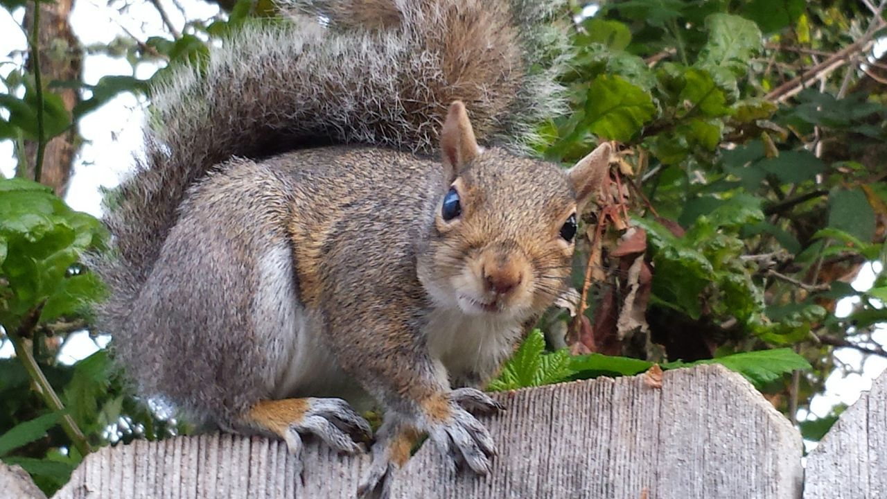 Beautiful stock photos of squirrel, Alertness, Animal Themes, Animals In The Wild, Close-up