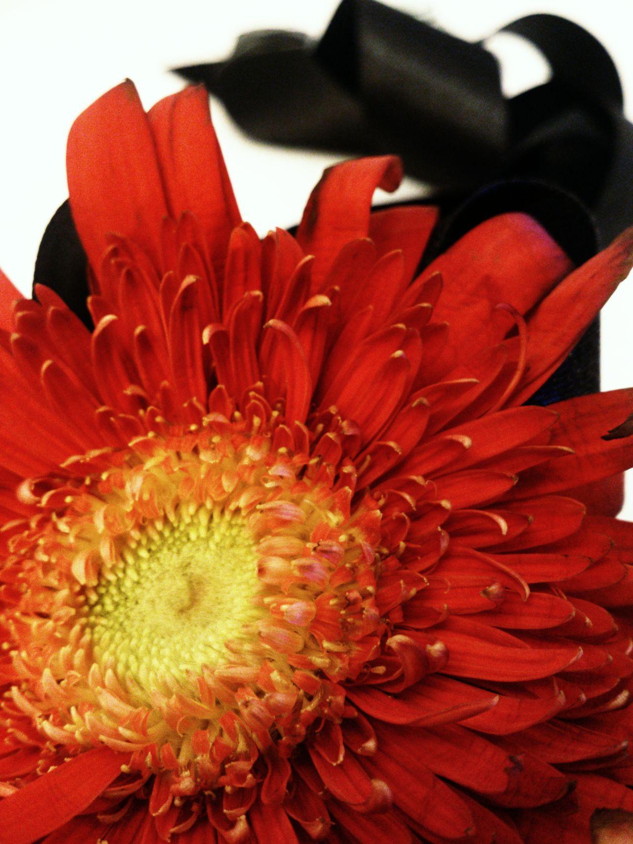 Flowerporn Eyeem Philippines