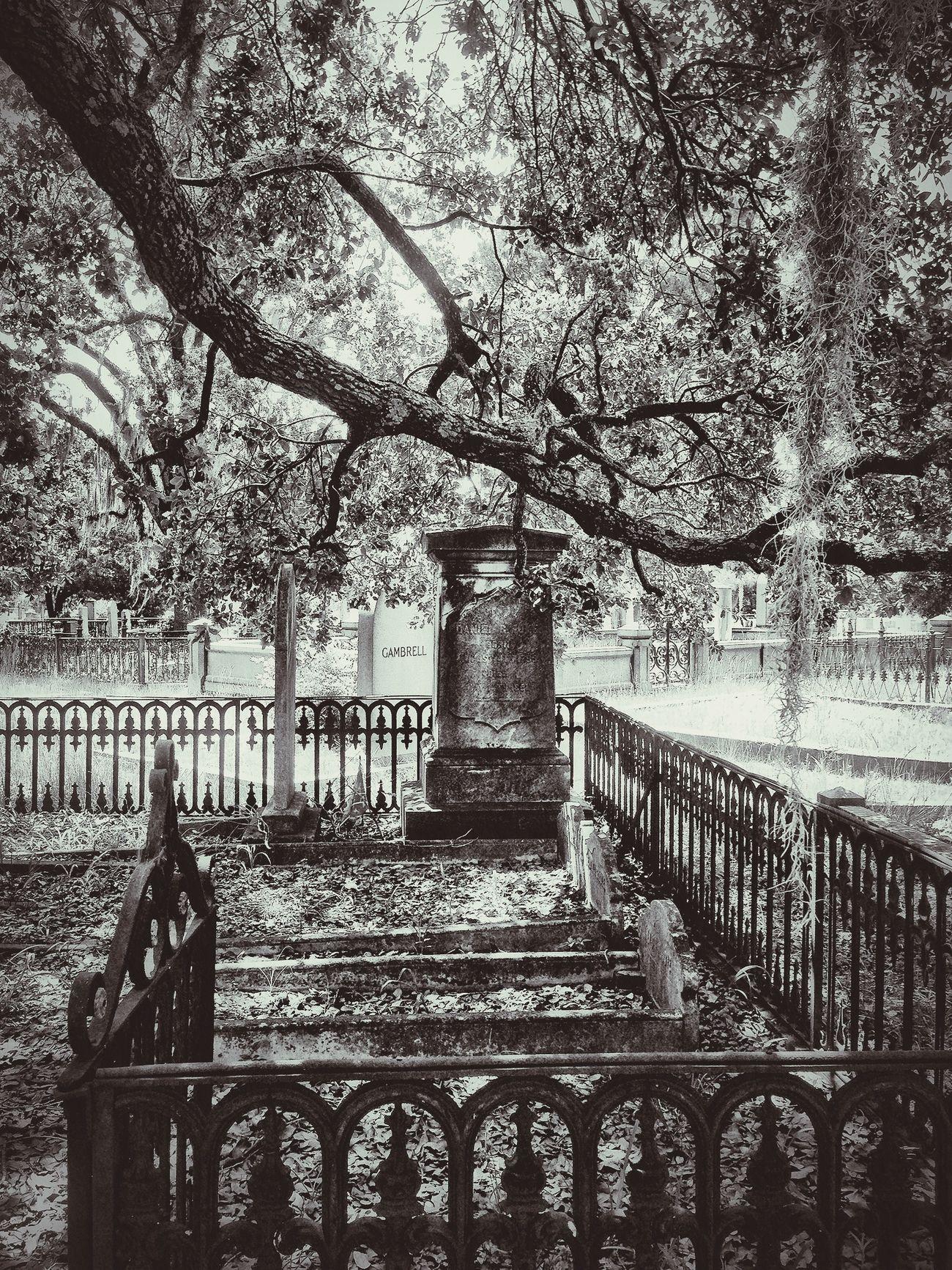 Blackandwhite EyeEm Best Shots - Black + White EyeEm Best Shots - Trees Graveyard Beauty