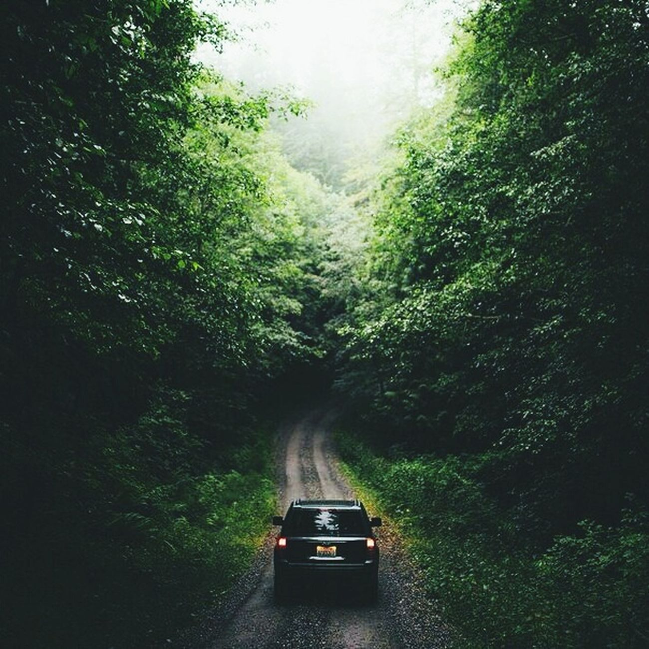 First Eyeem Photo Forest Road Aoutmn