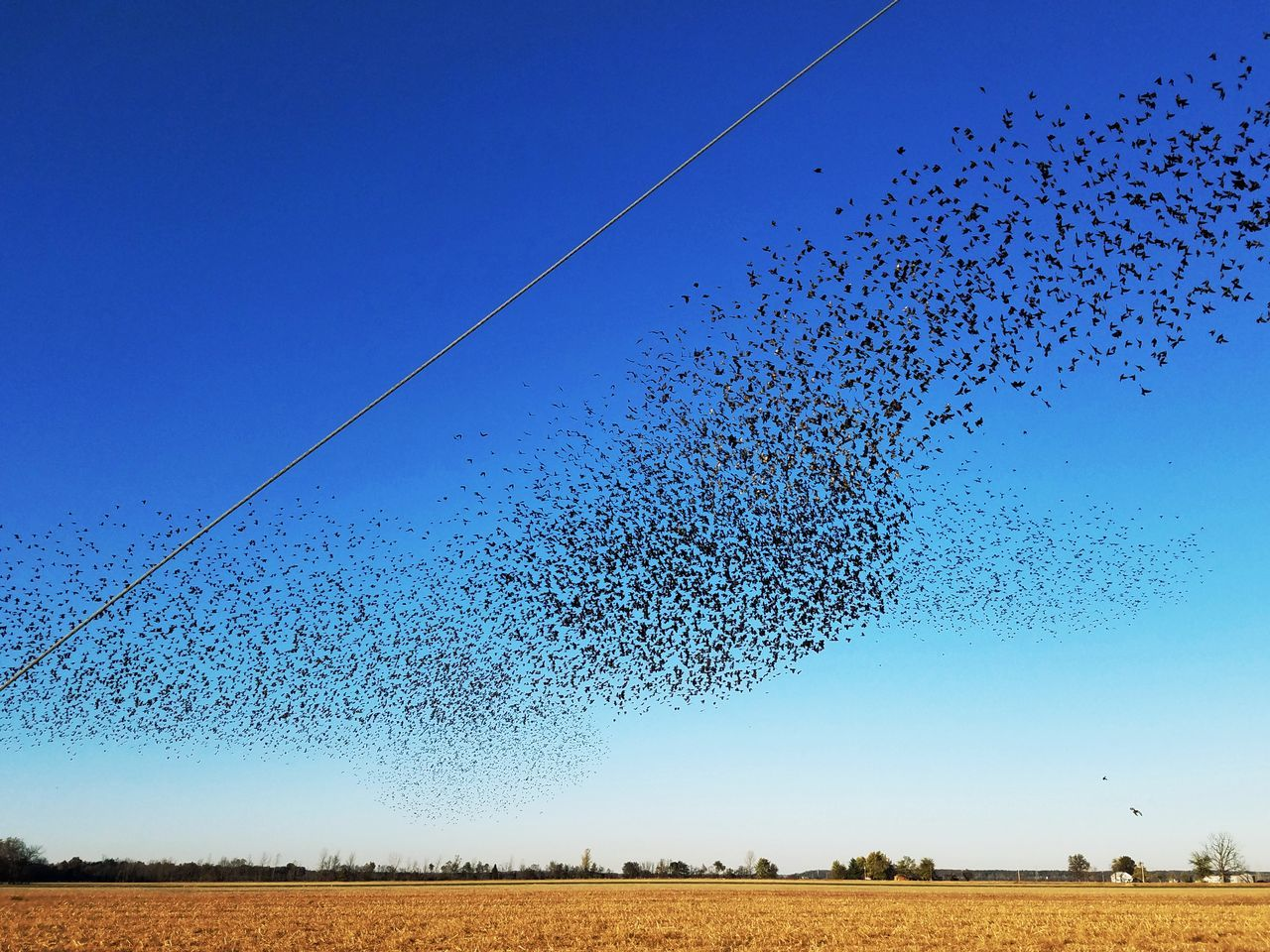 Birds Flying Against Clear Blue Sky