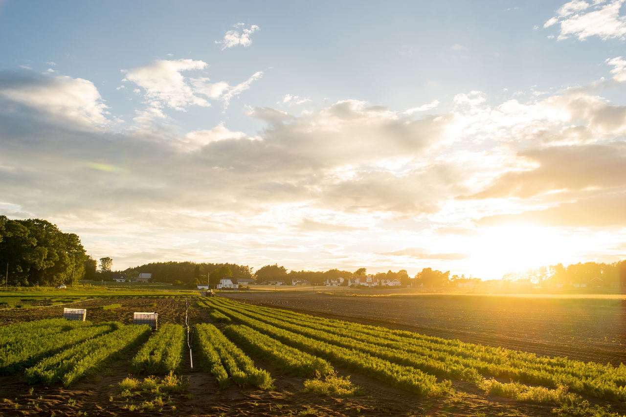 Just one more.. Agriculture Beauty In Nature Cloud - Sky Farmland Field Growth Landscape Nature Nevlunghavn No People Norway Outdoors Rural Scene Scenics Sky Sony A7 Sun Sunlight Sunset Tranquil Scene Tranquility