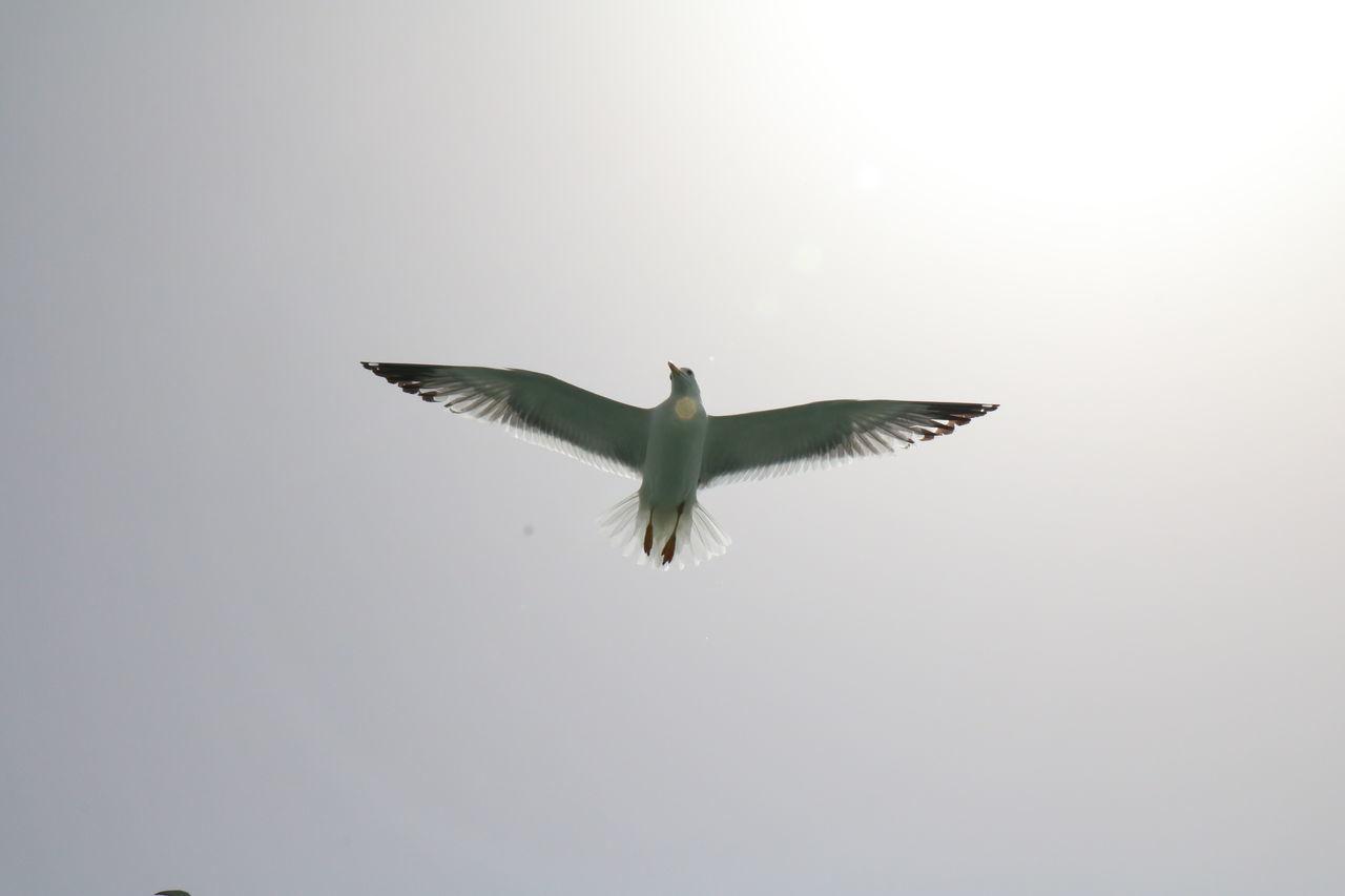 Born To Fly Dream Big Aim High Falcon Fly Fly High Live The Life Sky Winner