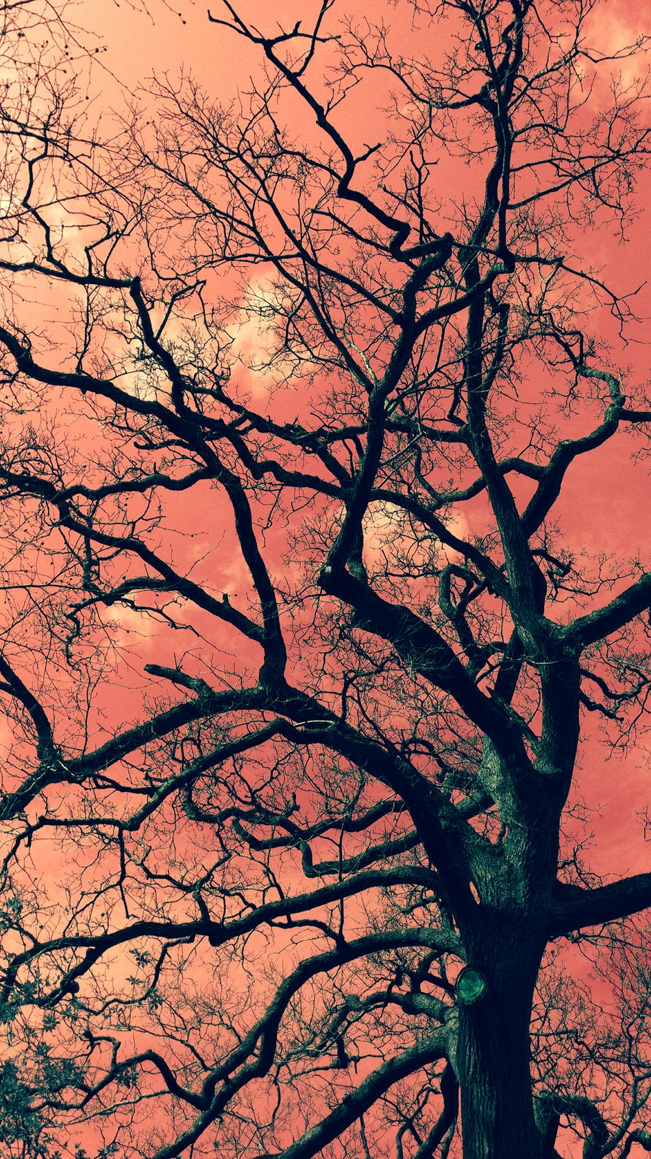 Silhouette Trees Another World Red Sky Colorful Sky Imaginary Landscapes Photography Sky Nature Surreal Sunset Taking Photos Check This Out Hello World Light And Shadow Landscape Atmosphere Fantasy Dreams EyeEm Best Shots Popular Photos Colors Beautiful Beautiful Nature Flowers