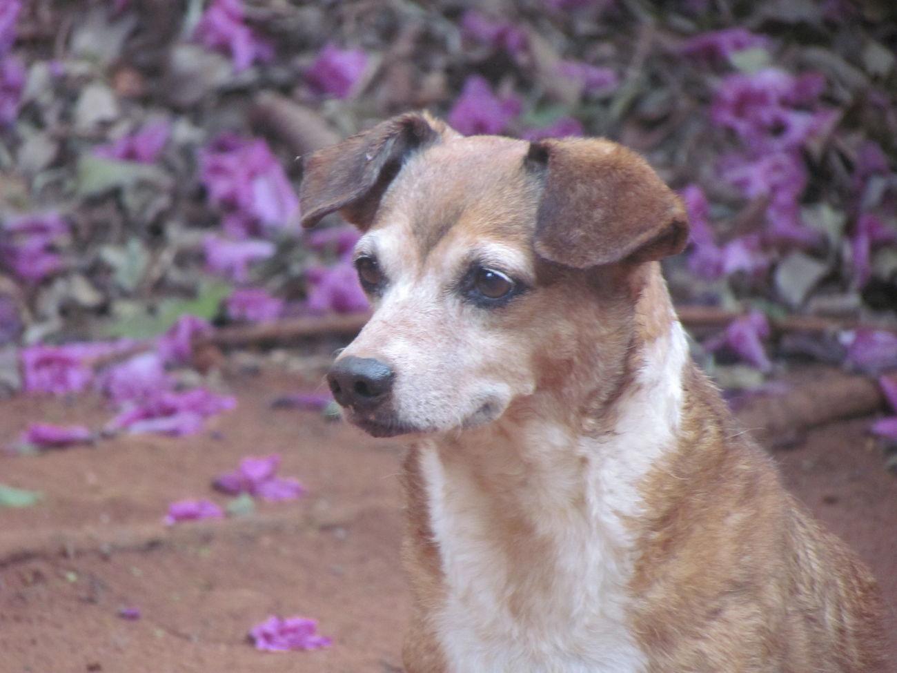 My Pet Tita Dog 13 Years Old♡. First Eyeem Photo