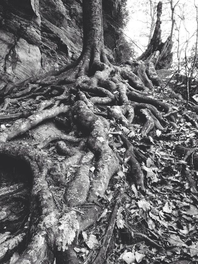 Don Filter Trees Blackandwhite