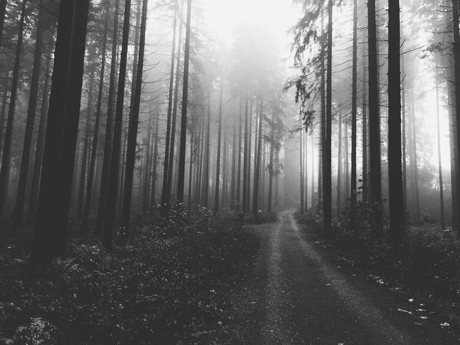 Tree Forest Nature Tranquility Tranquil Scene Fog Beauty In Nature WoodLand Landscape Scenics Tree Trunk Mist Day The Way Forward No People Outdoors Wilderness Hazy  Growth Branch Sauerland Blackandwhite Mystic Foggy