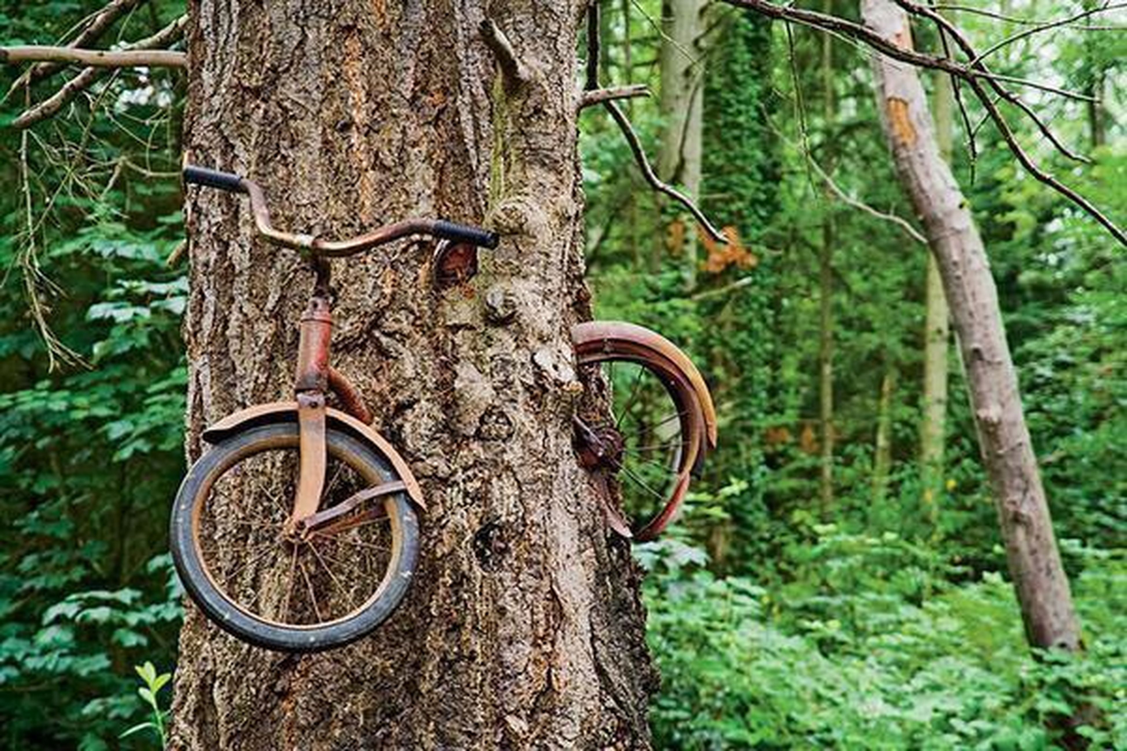 bicycle, tree, tree trunk, growth, transportation, branch, mode of transport, plant, nature, forest, day, outdoors, green color, land vehicle, no people, tranquility, stationary, leaning, beauty in nature, wood - material