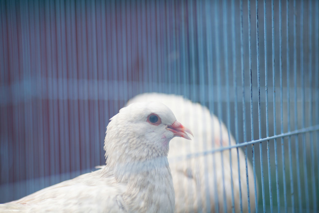 Beautiful stock photos of dove, Animal Themes, Animals In The Wild, Beauty In Nature, Bird