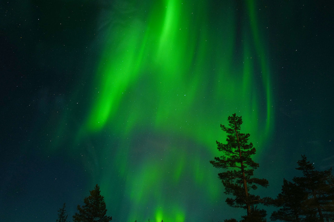 green color, aurora polaris, night, beauty in nature, nature, scenics, astronomy, outdoors, majestic, no people, sky, tree, star - space, low angle view, tranquility, illuminated, winter