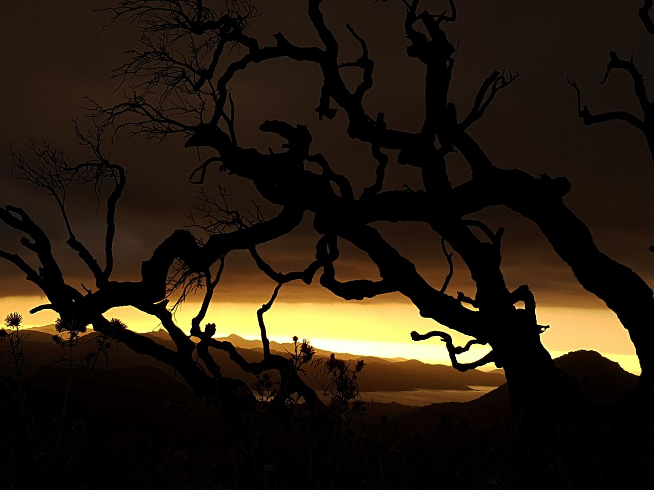 Tree Silhouette Sunset Nature Night Dramatic Sky Mountain Scenics No People Beauty In Nature