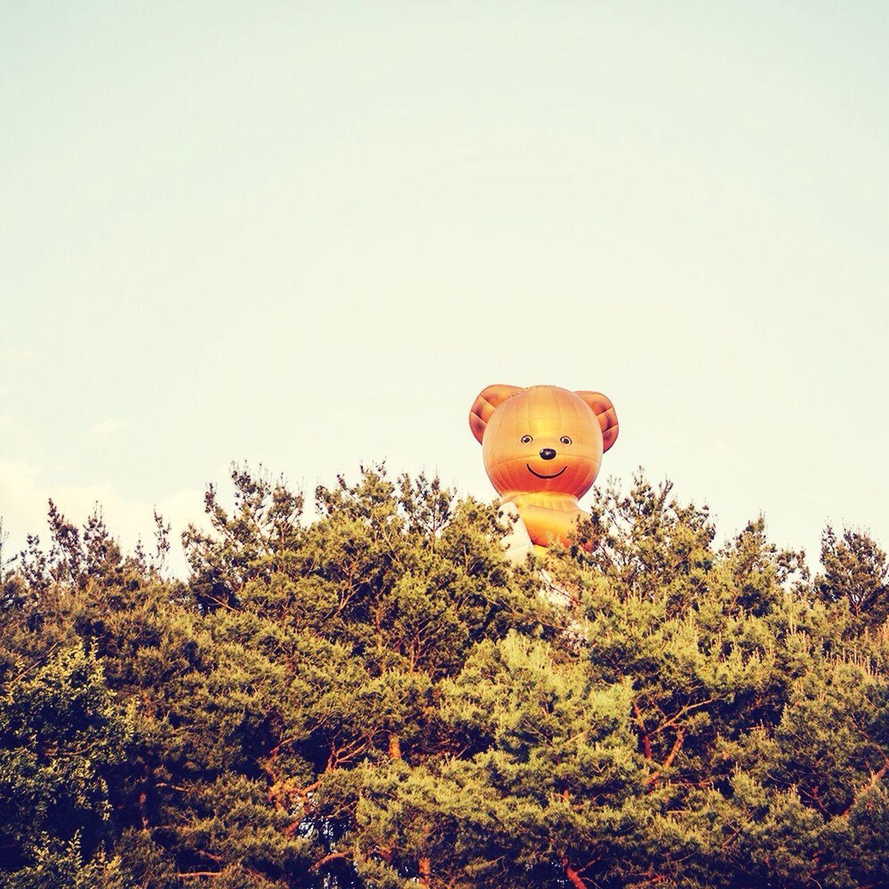 Beautiful stock photos of teddy bear, Animal Representation, Bestensee, Clear Sky, Copy Space