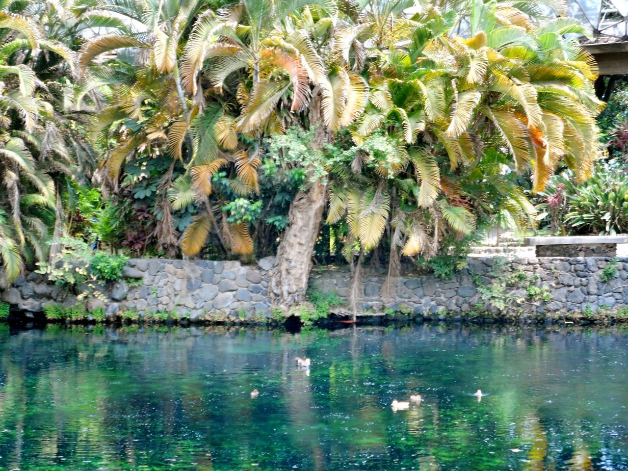water, reflection, outdoors, nature, plant, day, no people, animals in the wild, waterfront, animal themes, one animal, beauty in nature, tree, sea, scenics, palm tree, swimming, mammal