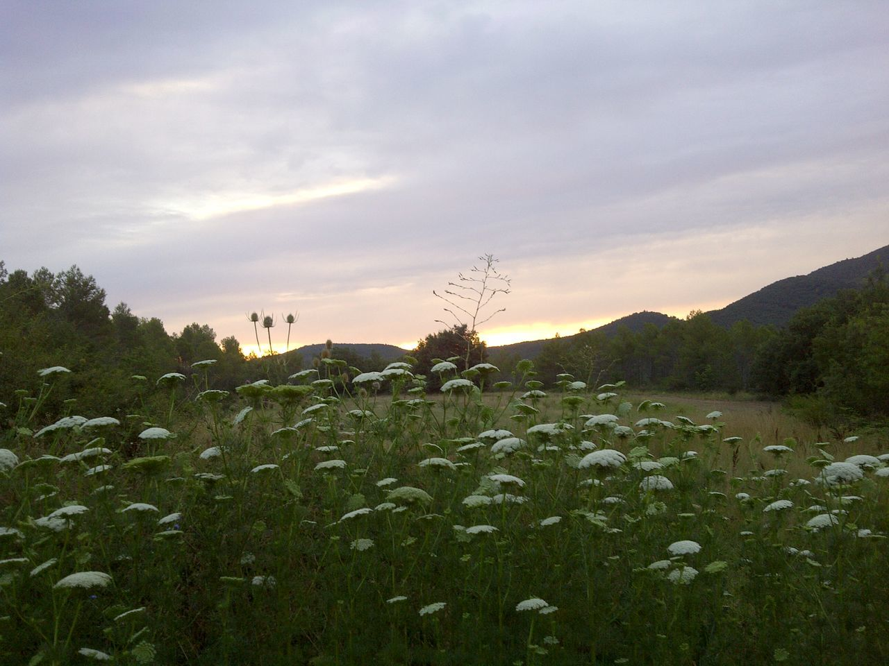 Fairytales Mountain Flower Nature Photography Silver And Green Painted Wall Sunrise