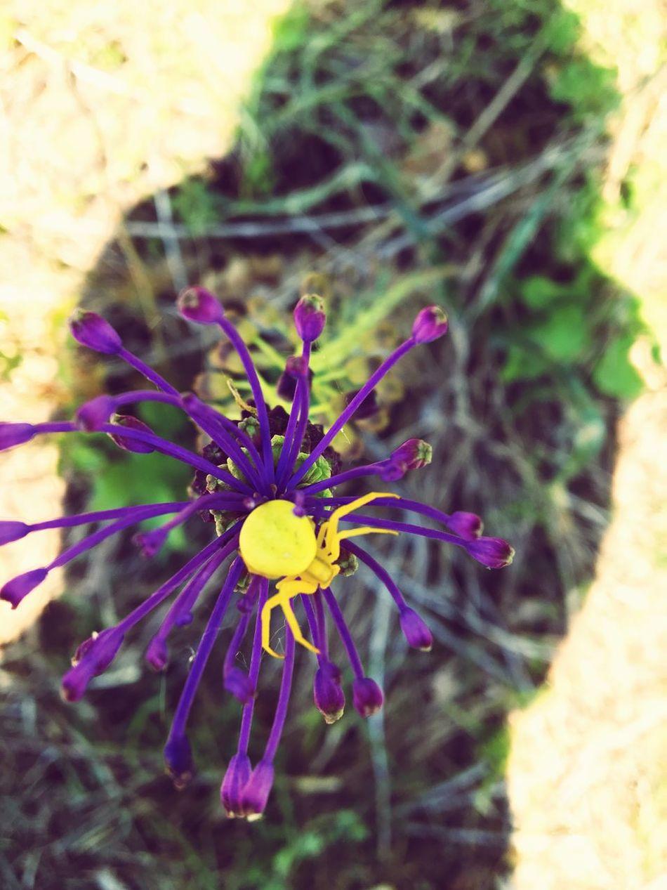 Nature Spider Violetandyellow Colors Lifecolor Mypointofview