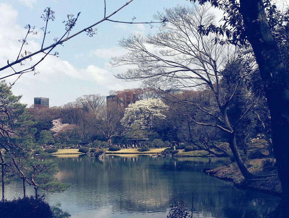 Edo Garden Rikugien Garden Tokyo Japan Spring Eyeem Spring Eyeem Nature EyeEM Tokyo Eyeem Photography Tokyospring2016