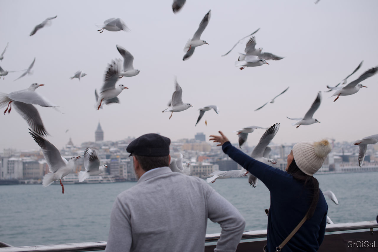 Its Cold Outside January2016 Winter Wintertime Istanbul Istanbul Turkey Istanbul City Ferry Ferryboat Ferry Views ASIA Europe Traveling Travel Hello World Enjoying Life Januarychallenge Water Water_collection Waterfront River River View River Collection Animals Birds