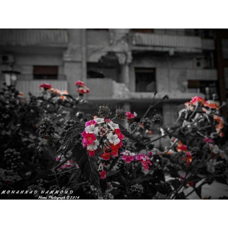و يبقى_الأمل :) هنا_حمص حمص_العدية حمص EyeOnHoms Homs Syria