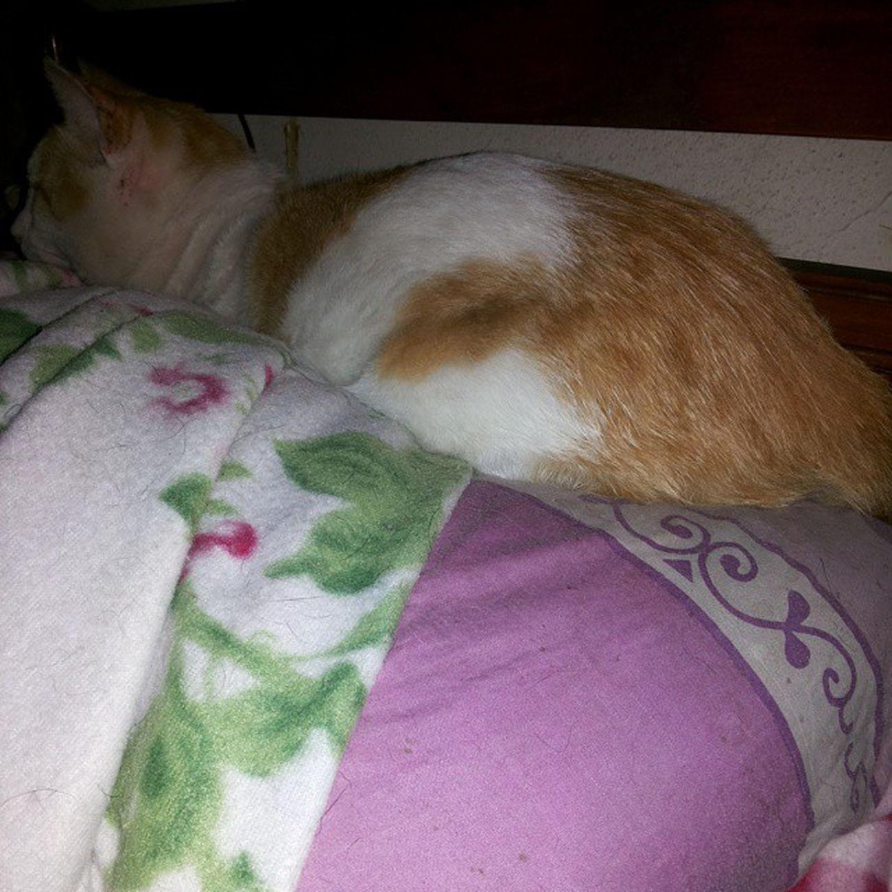 Manolo colonizó mi almohada