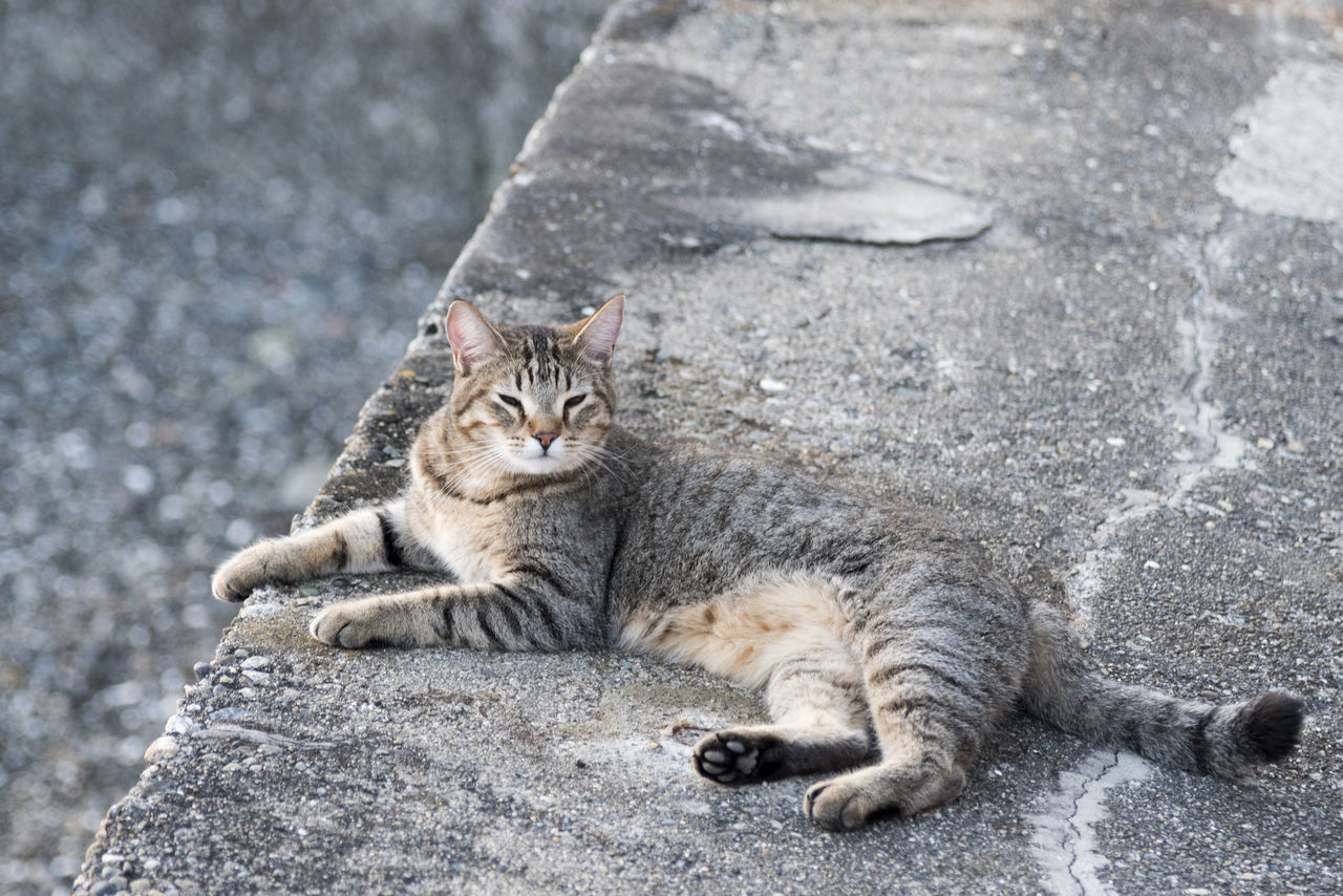 Camouflage seawall beach cat Adoption Animal Themes Beach Close-up Day Domestic Animals Domestic Cat Feline Fluffy Lying Down Mammal Meow Nature No People One Animal Outdoors Pets Relaxation Rescue Shelter Whiskers