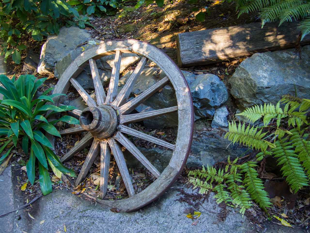 wagon wheel, wheel, transportation, day, outdoors, old-fashioned, no people, abandoned, horse cart, leaf, plant, growth, nature