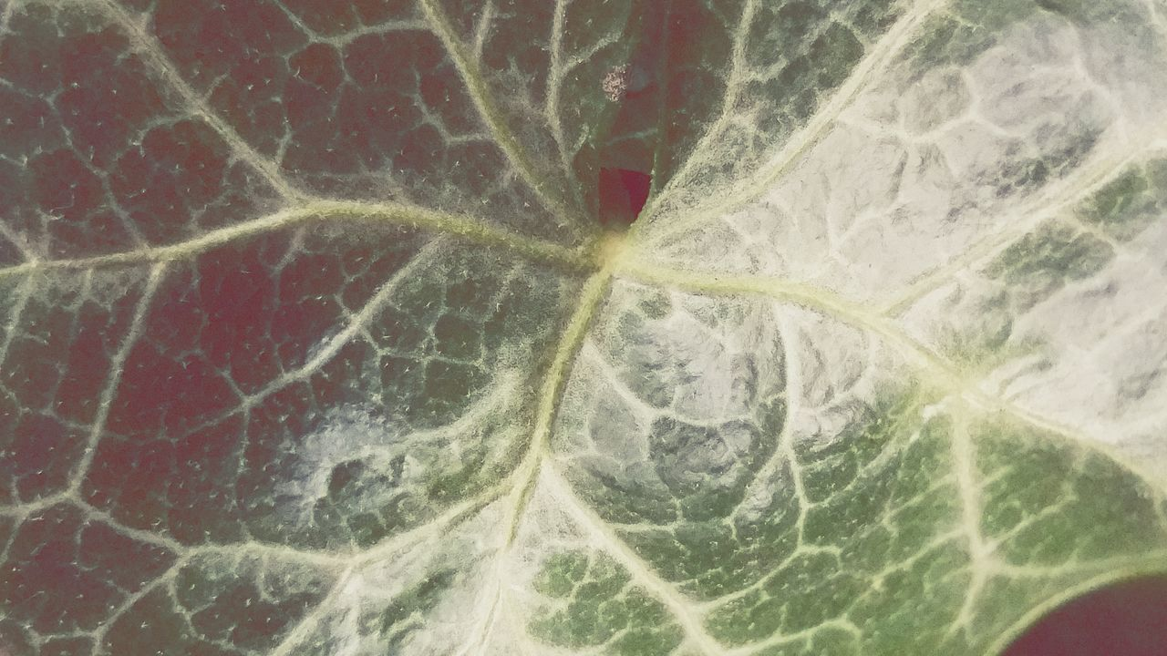 full frame, close-up, backgrounds, no people, leaf, textured, food, day, freshness, outdoors, nature
