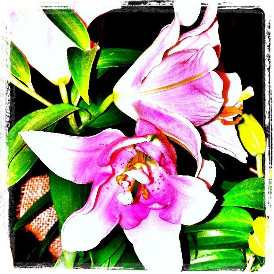Coleçãp Flores da lojinha. Flowers,Plants & Garden Flowerlovers Flores Natureza 🐦🌳 Nature
