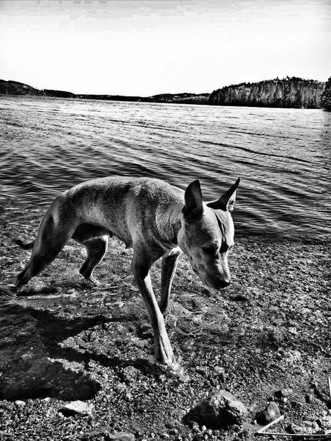 Dog is well, captured a pretty sad looking picture by surprise thought it looked powerful so i made some edits to it. For people who were wondering. 🙋Dogs Of EyeEm Sad & Lonely Blackandwhite Photography Black & White From My Point Of View Diffrentperspective Animal Photography Waternature Dramatic Lighting EyeEm Best Shots - Nature Popular Photos Eye4photography  Follow Me I'll Follow Back Feelings Check This Out Hobbyphotography Drama Dramatic Scene Actuallyhappydog
