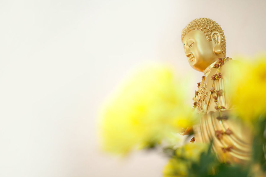 Buddhism Beauty In Nature Buddha Statue Buddhism Close-up Day Flower Flowers Freshness Gold Colored Indoors  Nature Scrupture Selective Focus Statue Temple Yellow
