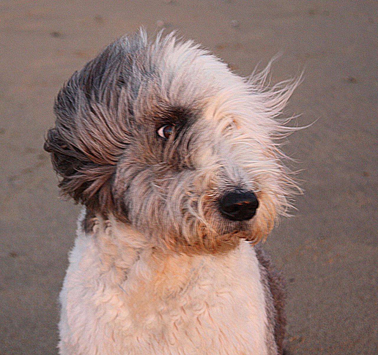 dog, pets, domestic animals, one animal, animal hair, animal themes, portrait, no people, outdoors, close-up, day, mammal