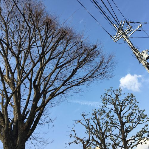 Tree Clear Sky Outdoors Sky Bare Tree Day Nature Power Supply Japan Photography Japanese  Osaka,Japan