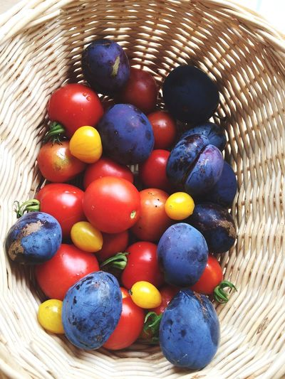 Harvest of the day Basket Food Food And Drink Variation Multi Colored Freshness Directly Above No People Indoors  Fruit Close-up Day Vegetable Tomato Plum Fresh From The Garden