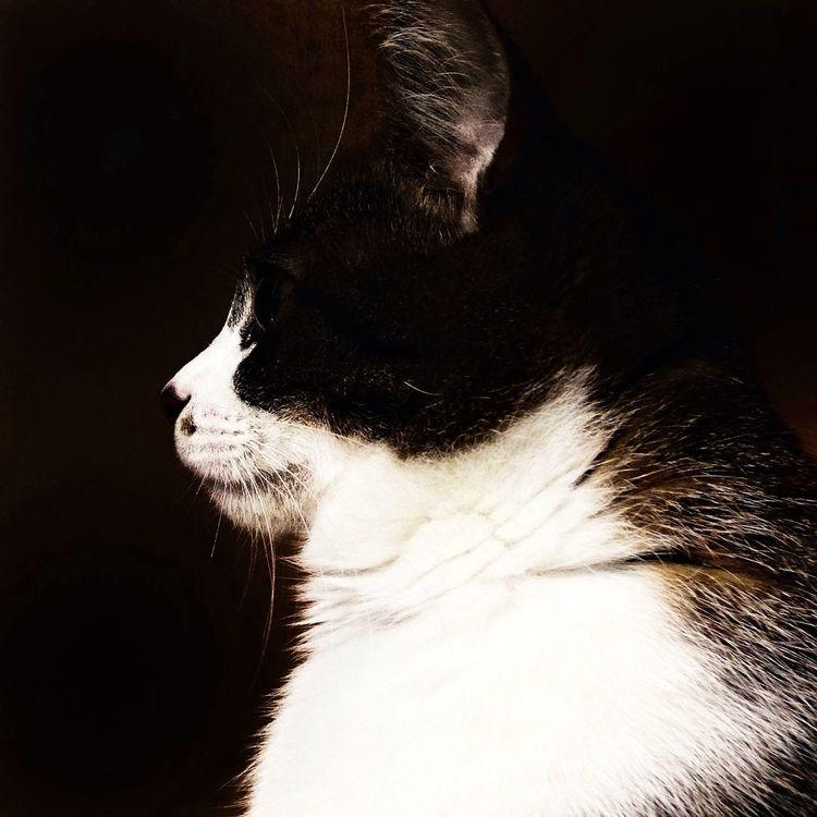 猫 ネコ Bw_collection