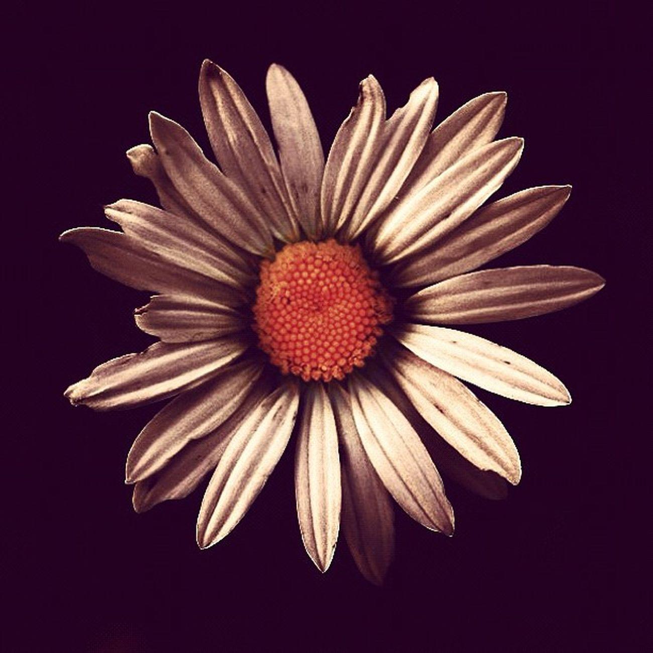 Flower Saskatchewan Saskatoon Omgcoolflowersweetlol