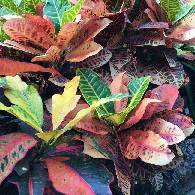 Backgrounds Beauty In Nature Belle Isle Close-up Detroit Leaf Leaves Natural Pattern Plant