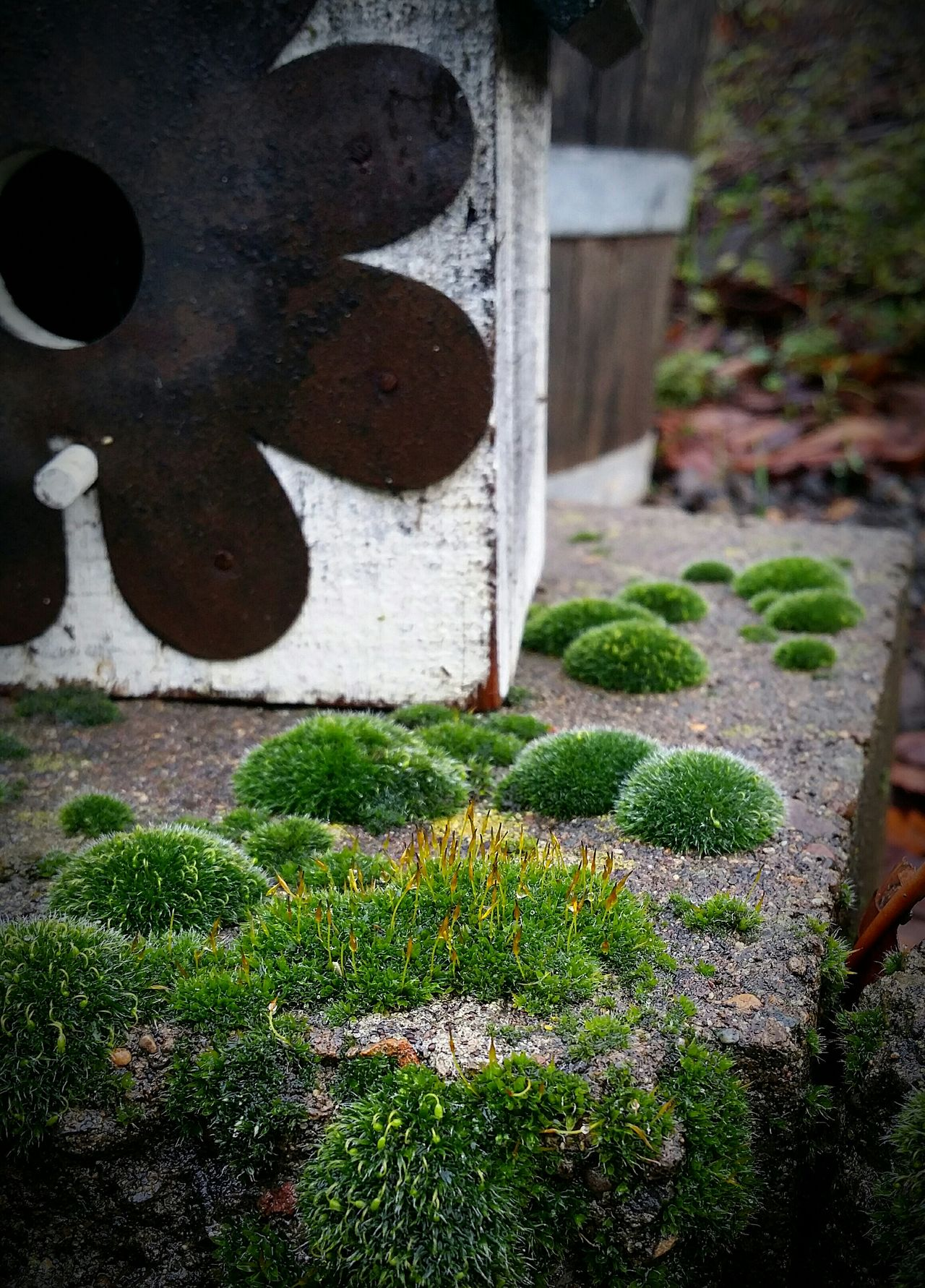 Fairy Garden Garden From The Fairy Garden Gardens Garden Photography Moss Mossy Mossy Garden