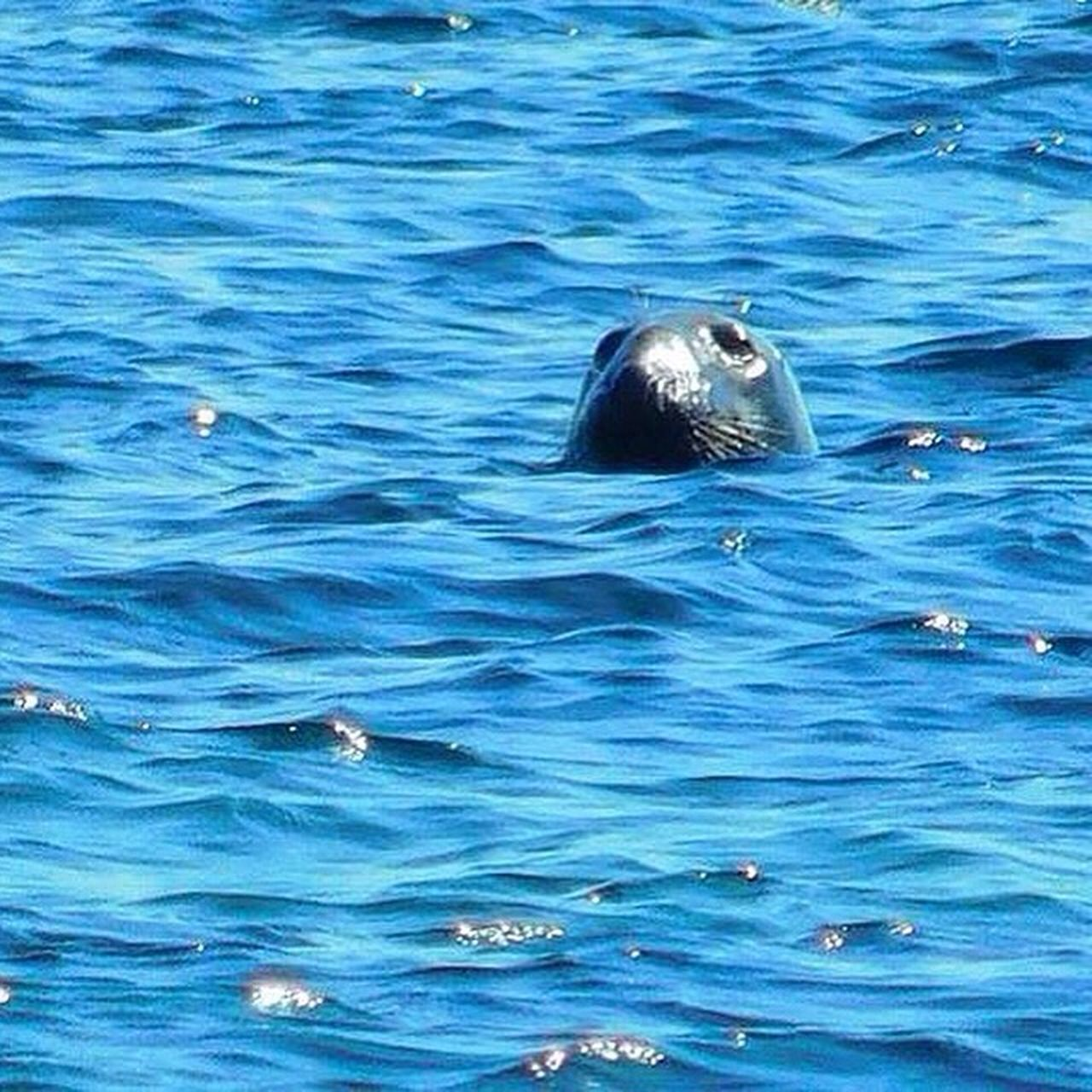 I was lucky enough to come across a bunch of seals ... Seals Wildlife & Nature Wildlife Seaside New England  Outdoor Pictures July Showcase July 2016 EyeEm Nature Lover Streamzoofamily Sealife Outside Photography Massachusetts Nature_collection