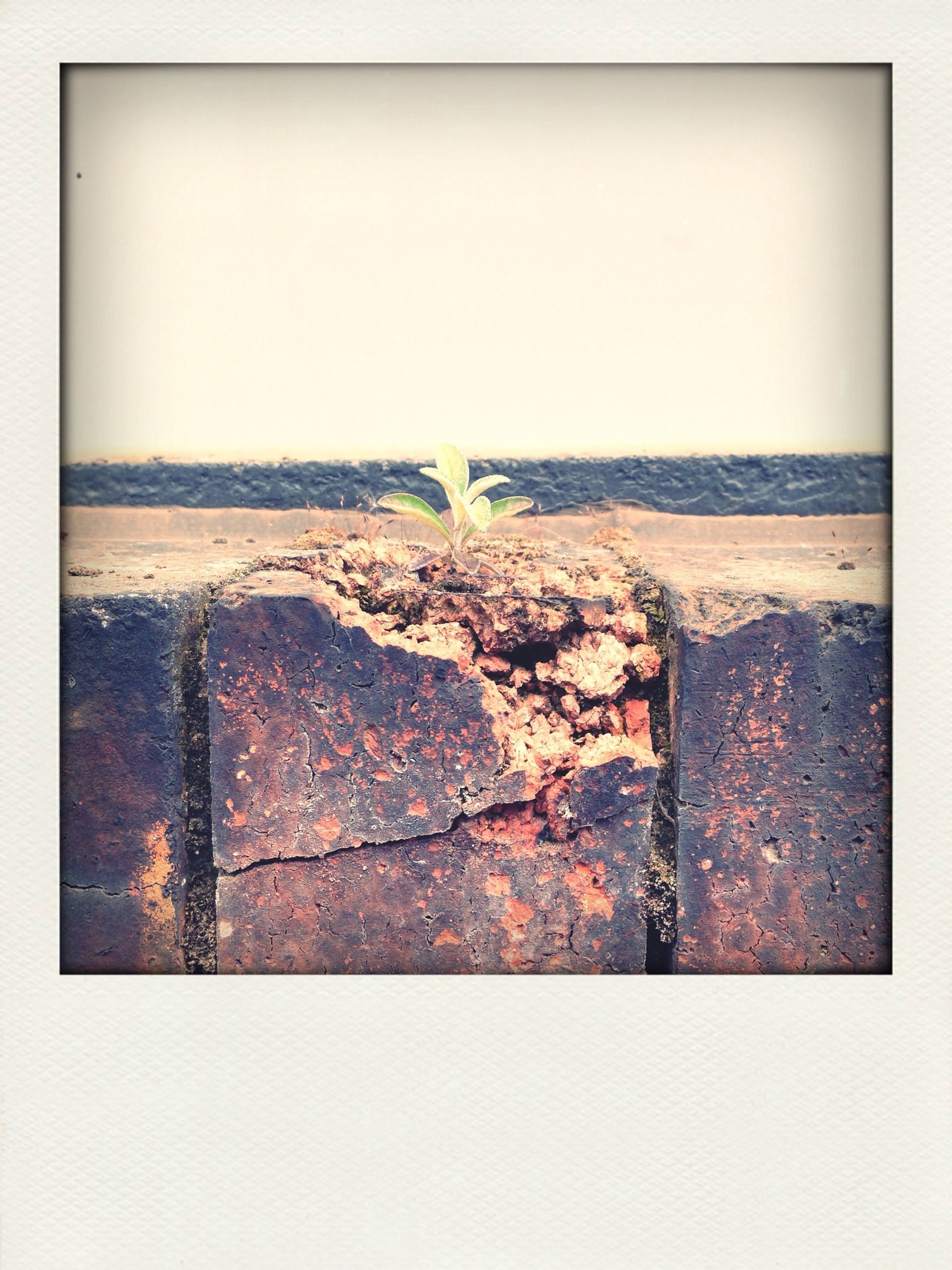 transfer print, auto post production filter, copy space, wall - building feature, built structure, architecture, clear sky, no people, textured, outdoors, wall, day, vignette, abandoned, close-up, damaged, old, building exterior, pattern, metal