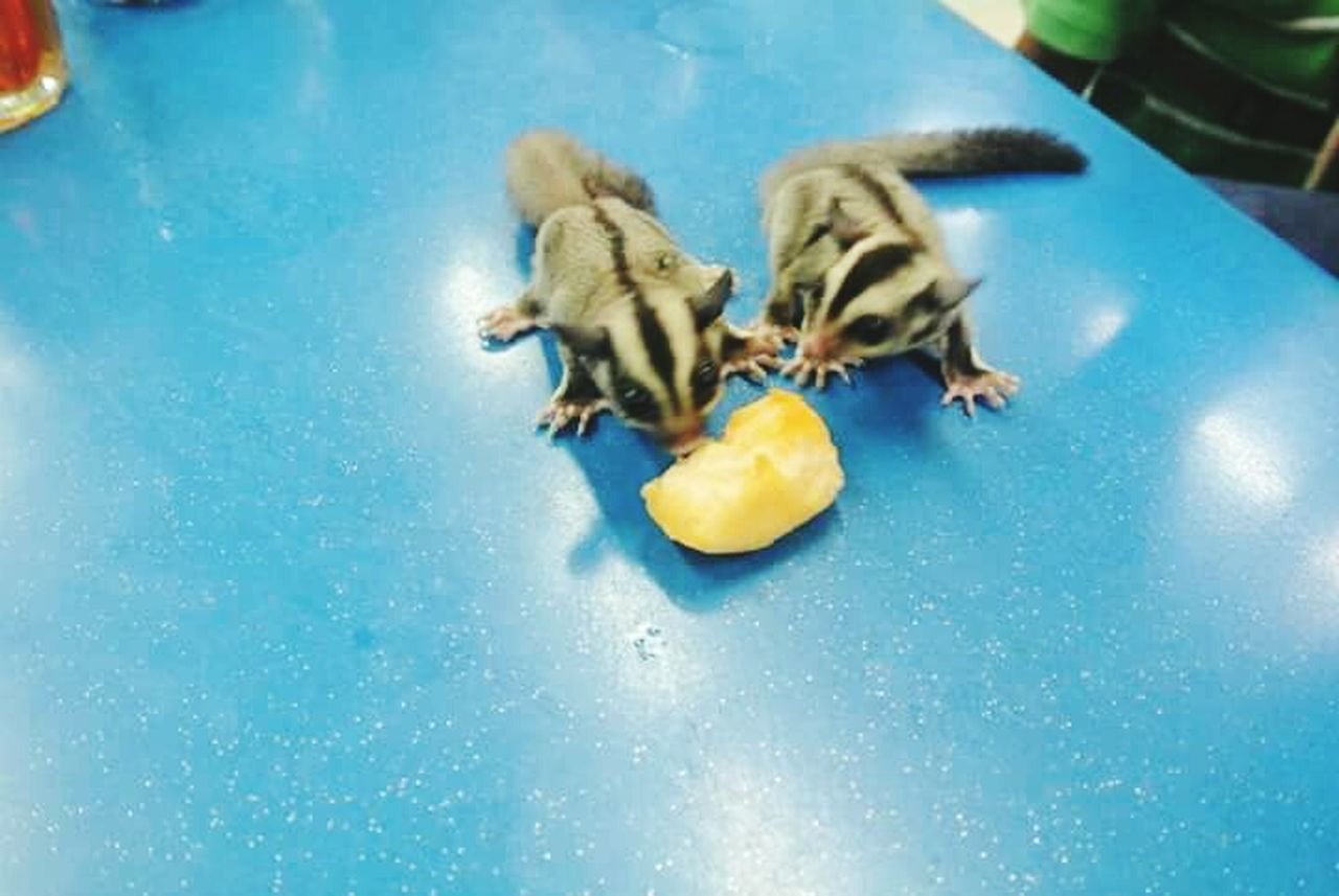 food and drink, food, one animal, fruit, animal themes, blue, eating, water, indoors, swimming pool, pets, full length, no people, day, freshness, mammal